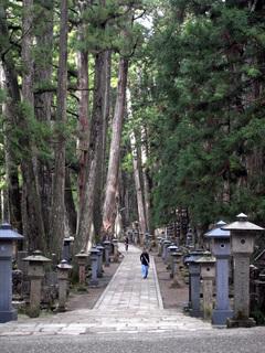 高野山奥の院へ至る参道